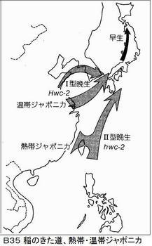 B35 稲のきた道.jpg