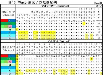 B46 塩基配列.jpg