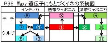 B96 稲の系統図.jpg
