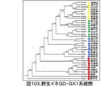 図103GD-GX1系統樹.jpg