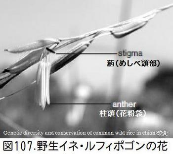 図107ルフィポゴン花.jpg
