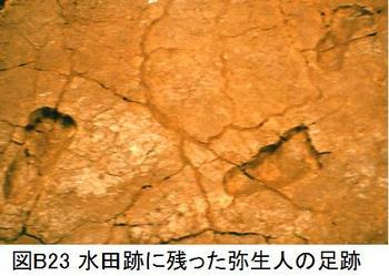 B23水田の足跡.jpg