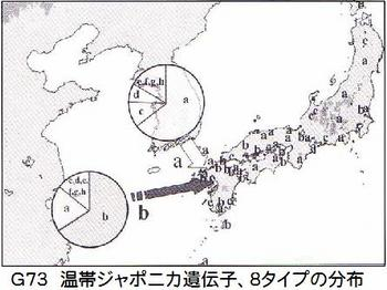 G73イネDNA8タイプ.jpg